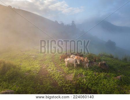 High Mountains at Mea La Noi City in Mae Hong Son , Thailand