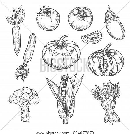 Pumpkin, tomato, broccoli, corn, eggplant, carrot, Farmers market badge. Monochrome vintage engraving organic vegetables, wheat and fruits sign isolated on white. Sketch vector hand drawn illustration.