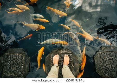 traditional gold fish koi koi floats in a pond around the bare feet of a tourist.