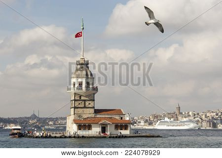 seagull, sea and maiden tower in istanbul