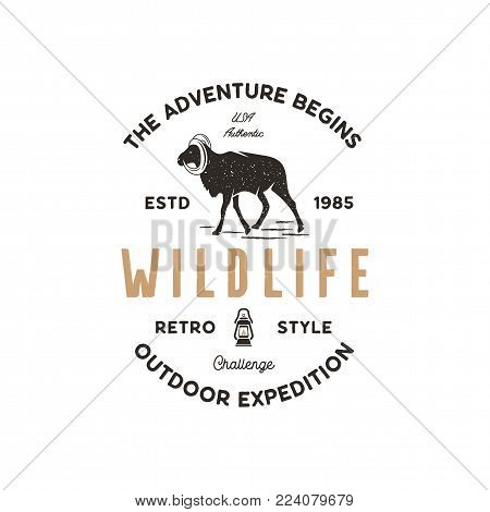 Adventure logo design. Camping adventures badge template. Wild goat typogaphy insignia concept. Vintage hand drawn silhouette shape of wild animal. Stock vector isolated on white background.