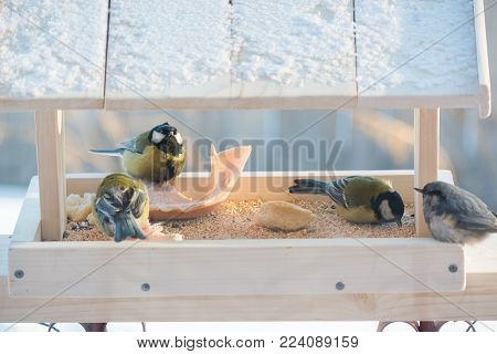 Tit with birds in winter eating in the trough of grain and lard poster