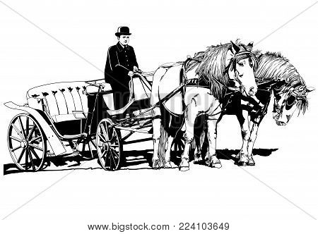 carriage with horses illustration art vector animals theme