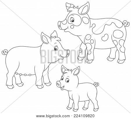 Funny family of a small piglet, a pig and a hog, a black and white vector illustrations in cartoon style for a coloring book