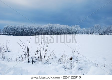 Snow covered field and forest and a dark sky in a wintry landscape