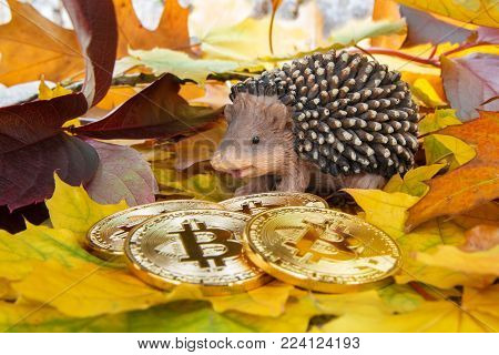 Hedgehog with four Golden coins Bitcoin on colorful autumn leaves, Closeup design wallpaper background. Bitcoin financial concept.