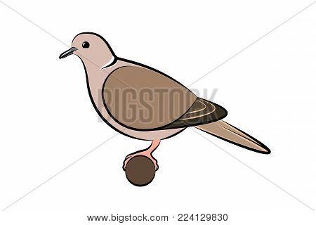 Collared Dove. Vector Illustration Of A Collared Dove