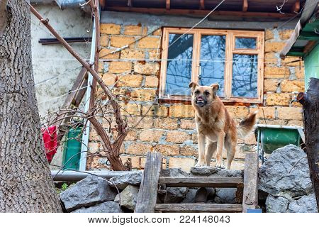 Mutilated stray dog without part of nose standing outdoors