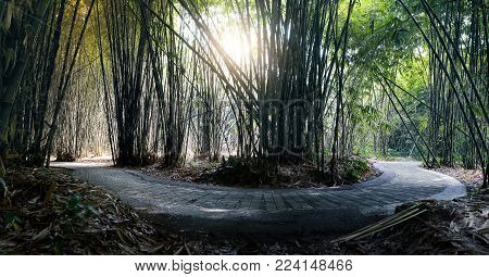 Roundabout path inside lush bamboo forest in the penglipuran village bali during cutting harvest time.