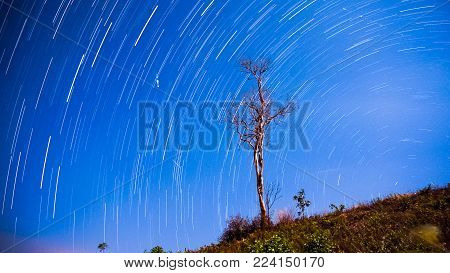 Brighter Joshua Tree Star Trails,star trails and shooting star over the trees.