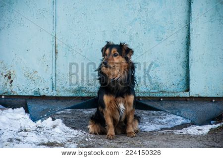 An ordinary dog sits near the gate and guards its territory.