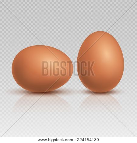 Realistic brown chicken eggs. Natural and healthy farm food vector illustration. Eggs farm natural, fresh food with shell