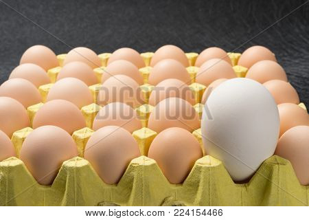 giant size goose egg between small chicken eggs concept of size comparison