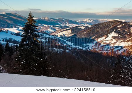forested hills of Carpathian mountains in winter. beautiful landscape with mountain ridge with snowy peaks in the distance