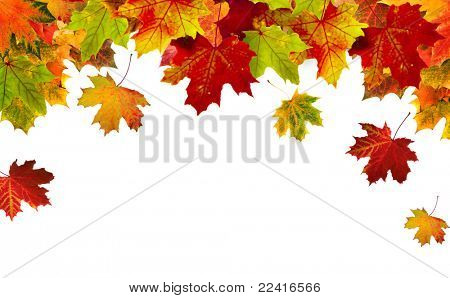 Autumn card of colored leafs