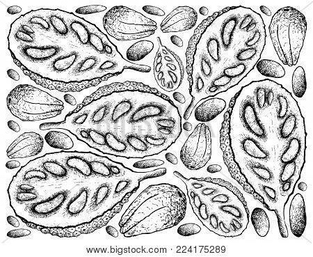 Fruit, Illustration Background of Hand Drawn Sketch of Ripe and Sweet Jackfruit or Artocarpus Heterophyllus Fruit.