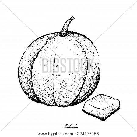 Fresh Fruit, Illustration Hand Drawn Sketch of Muskmelon, Cantaloupe, Mushmelon, Rockmelon, Sweet Melon or Spanspek Isolated on White Background.