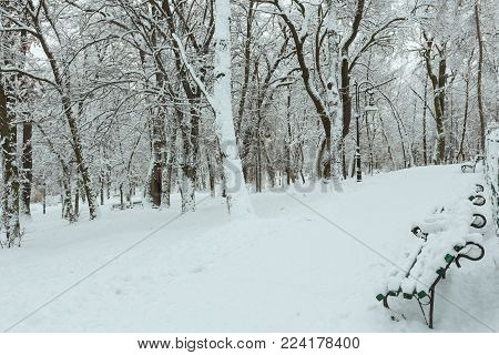 Beautiful overcast morning winter Ivan Franko park in the center of Lviv city, Ukraine.