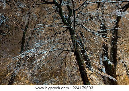 Big tree branch in beautiful illuminated night winter Ivan Franko park (Lviv city, Ukraine).