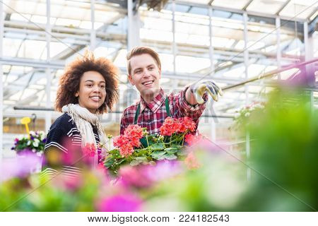Low-angle view of a cheerful and handsome vendor showing to a female customer a beautiful ornamental houseplant for sale in a modern flower shop