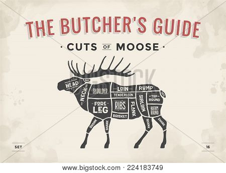 Cut of meat set. Poster Butcher diagram, scheme - Moose. Vintage typographic hand-drawn moose or elk silhouette for butcher shop, restaurant menu, graphic design. Meat theme. Vector Illustration