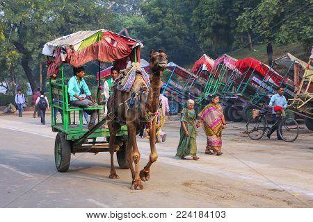 AGRA, INDIA - NOVEMBER 8: Unidentified men drive camel cart for tourists in Taj Ganj neighborhood on November 8, 2014 in Agra, India. Agra is one of the most populous cities in Uttar Pradesh