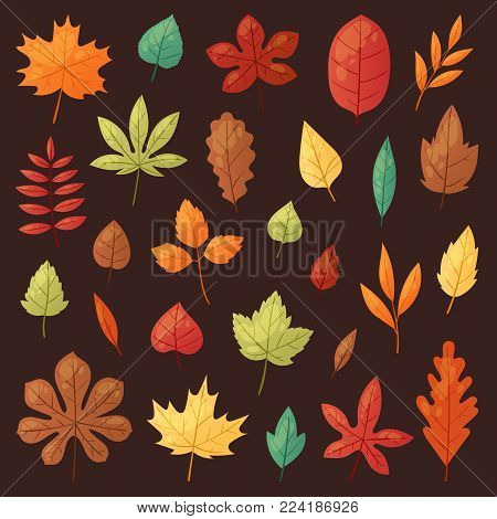 Autumn leaf vector autumnal leaves falling from fallen trees leafed oak and leafy maple or leafing foliage illustration fall of leafage set with leafage isolated on background.