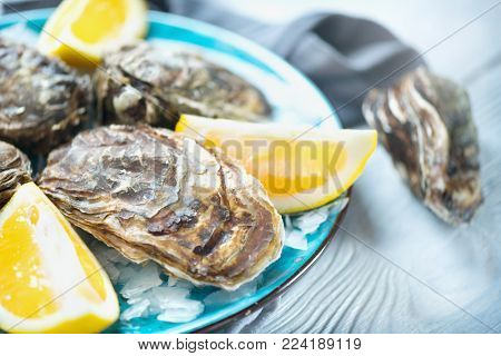 Fresh Oysters close-up on blue plate, served table with oysters, lemon and ice. Healthy sea food. Fresh raw Oyster dinner in restaurant. Gourmet food.