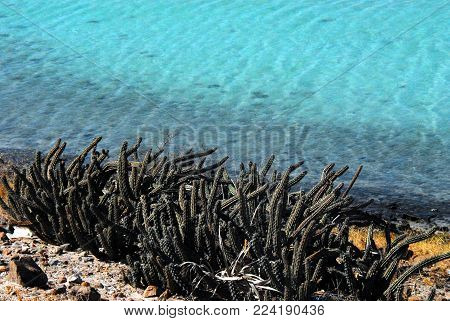 A wonderful contrast of smooth turquoise water and prickly cactus.  Photographed in BaJa, Mexico at Los Cabos