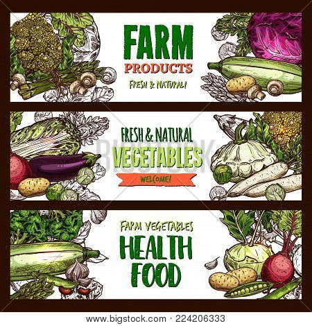 Vegetables and farm veggie products or healthy vegetarian food market sketch banners. Vector cabbage, zucchini squash or beet and radish, avocado or organic carrot and tomato, pumpkin or cauliflower