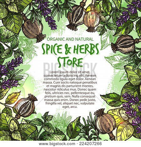 Spice and herbs seasonings and condiments sketch poster for farm store market. Vector spices and organic herb basil and poppy seeds or cilantro, tarragon or chili pepper and oregano cooking seasoning