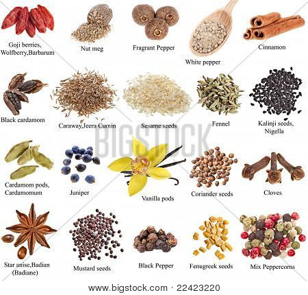 set of spices with names on a white background