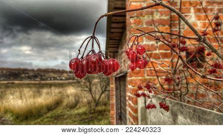 Nature, blur, berries, dog rose, summer house, summer, macro