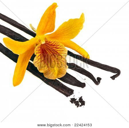 Orchid with vanilla beans  isolated on white background