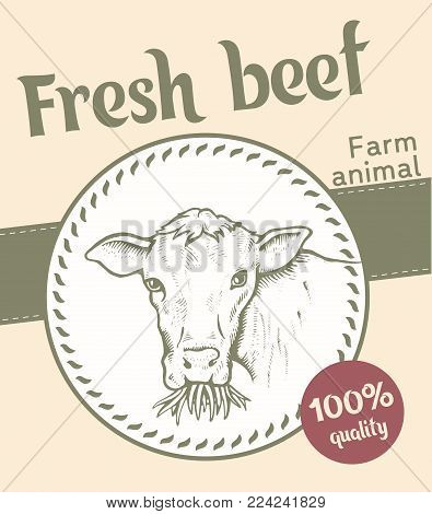 Portrait of Bull. Cow looks and chews the grass. Sketch of a cow face. Vector illustration. Label or sticker. Fresh beef. Farm animal