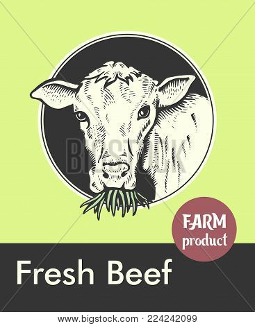 Label of Bull. Cow looks and chews the grass. Sketch of a cow face. Vector illustration. Label or sticker. Fresh beef. Farm animal. You can use it in your advertising