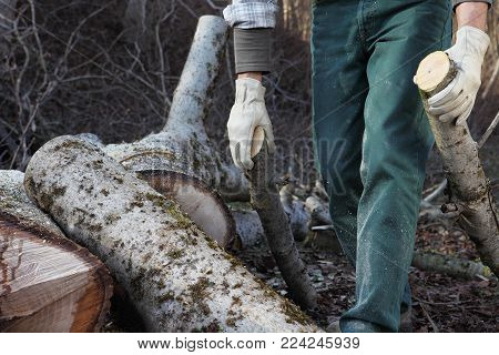 Lumberjack woodcutter carrying logs of big tree in the autumn forest