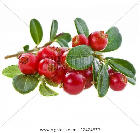 cranberry isolated