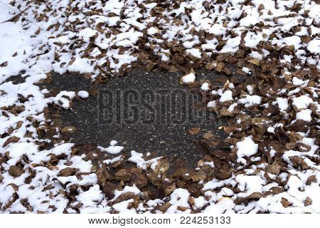A log is covered with moss and snow in a forest in the winter. Leaves are covered with white snow in the woods. It is wintertime in nature