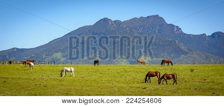 Free range horses along the Garden Route in South Africa