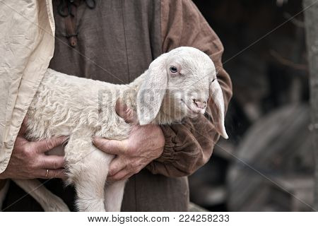 a small lamb in the shepherd's arm
