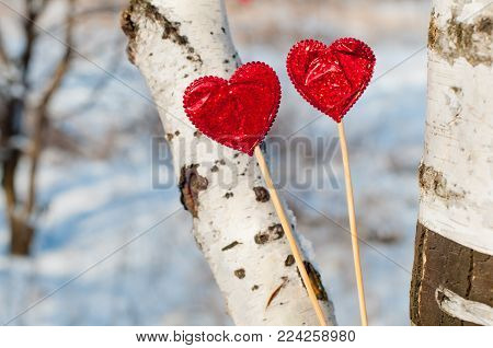 Two bright red hearts staying on wooden sticks between birch trunks in sunny winter day. Love concept