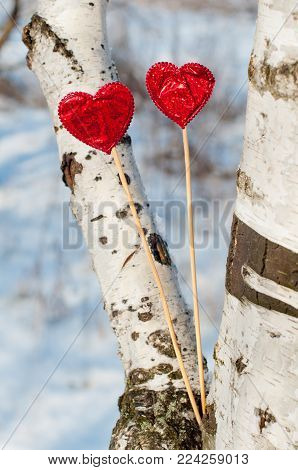 Two bright red hearts staying between birch tree branches in winter. Vertical photo