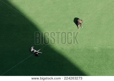 Concept of calm, minimalism, an alternative to choice - two dogs sleep on a green lawn, one in the shade, one in the sun.