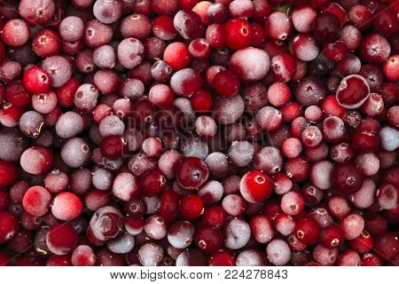Frozen cranberries covered with rime. Just taken out of the freezer.