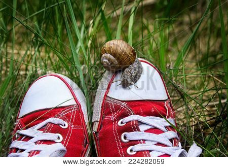 Feet in old ripped red gumshoes with big snail on top outdoors. Unity man with nature. Speed and dawdling.