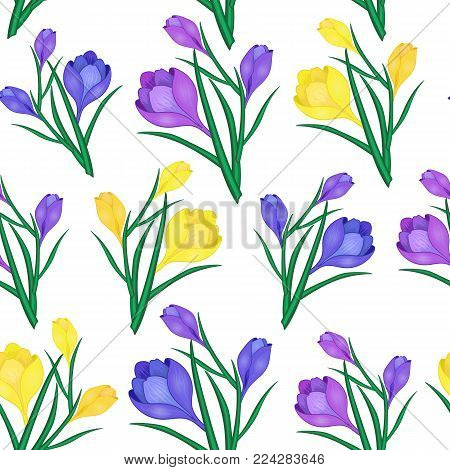 Beautiful spring seamless pattern with Yellow, blue crocuses.The flowers of saffron on a white background.Vector illustration.Print for gift wrapping, fabric, paper, postcards and website design.