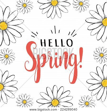 Hello spring. Hello spring greeting card with daisies. Hello Spring vector illustration