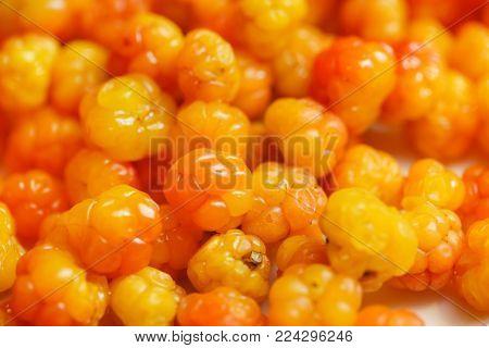 fresh and ripe cloudberry