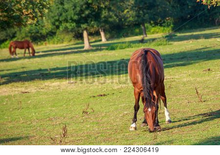 Horses grazing in the field for fresh grass during daytime
